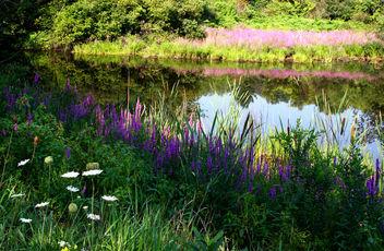 summer landscape - Free image #277299