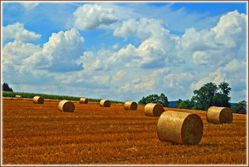 harvest time - image gratuit #277609