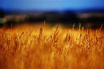Grass - Free image #278149