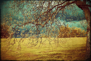 tree - Kostenloses image #278329