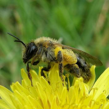 bain de pollen / bath of pollen - бесплатный image #278419