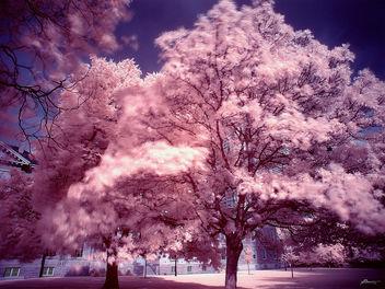 pink - image gratuit #278539
