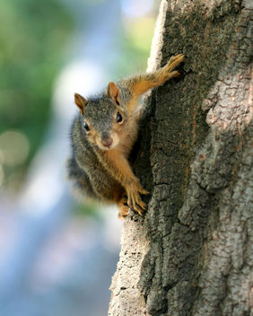 Squirrel - image gratuit(e) #278759