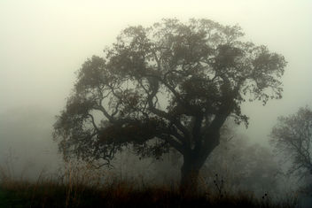 Ghost Trees - Free image #279179
