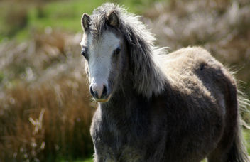 Wild Horse - Free image #279679