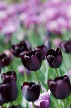 eternal spring - image #280479 gratis