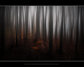 autumn - Kostenloses image #280499