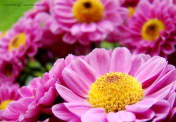 FLORES CARAMELIZADAS ( FLOWERS WITH CARAMEL) - Free image #280569