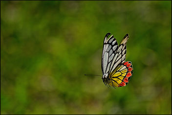 The Flying Jezebel - image #280789 gratis