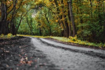 A winding road in forest - бесплатный image #280949
