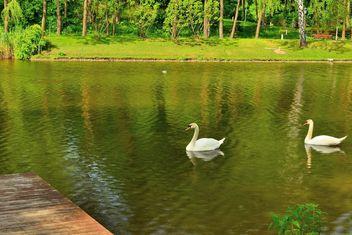 White swans - image #280989 gratis