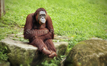 Medan, In Sitting Down Pose (DSC_0092) - image #281269 gratis