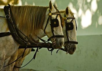 Horses - Free image #281289