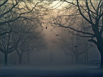 Fog - image gratuit #281339