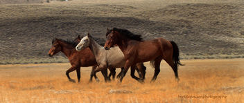 running wild - image #281439 gratis