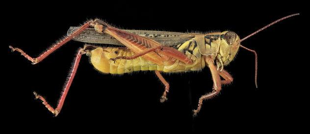 Grasshopper2, U, Side, MD, PG County_2013-07-30-15.34.53 ZS PMax - Free image #281909