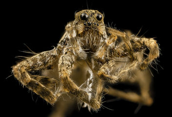 Spider Unknown, Face, MD, Prince Georges_2014-03-20-16.49.17 ZS PMax - Free image #282569