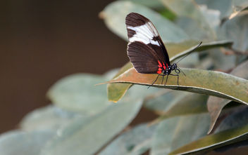 Butterfly | Schmetterling - image #283089 gratis