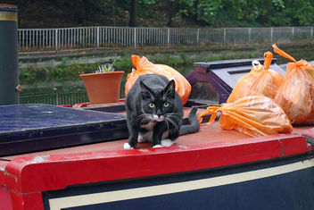 Boat Cat - Kostenloses image #283329