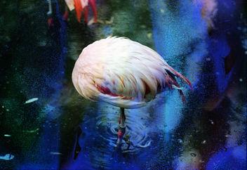 Flamingo - Free image #283409