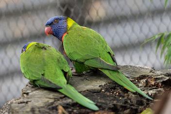 parrot skansen - image gratuit #283479