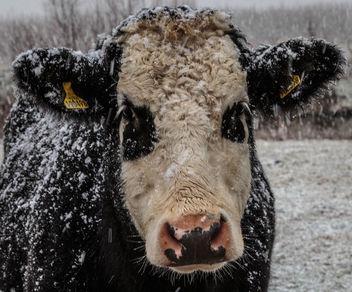 20150131__5D_2390 - RSPB Ouse Fen Snowy Day.jpg - Free image #283529