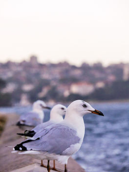 sea gull - image gratuit #283549
