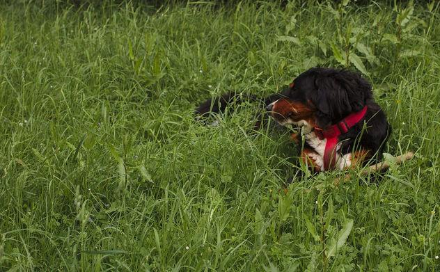 Disa lies in the grass - image #283739 gratis