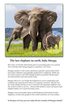 The Last Elephant on Earth - бесплатный image #283749