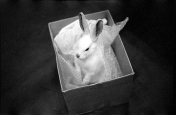 putting the bunny back in the box - Free image #283819