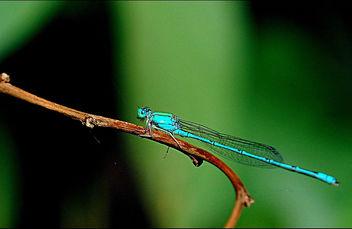 Blue Riverdamsel - image #284159 gratis