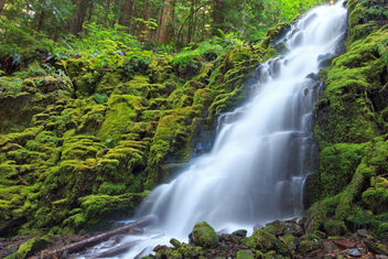 White Branch Falls - Free image #284529