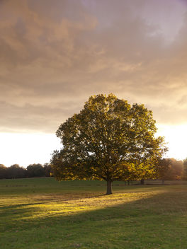 Tree in Richmond Park - image gratuit #284619
