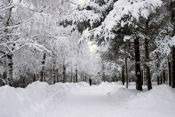Winter Walk - image gratuit #284899