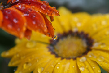 Floral Dreamcatcher - Free image #285109