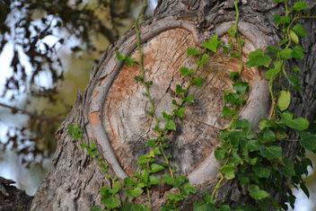 Nature's Heart - бесплатный image #285389