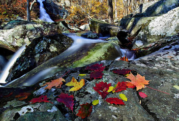 Autumn leaves near waterfall - Free image #285599