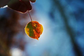September Colors - image #285979 gratis