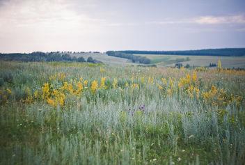 Field - Kostenloses image #286309