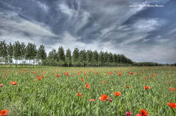 Wonderful nature - Free image #286339