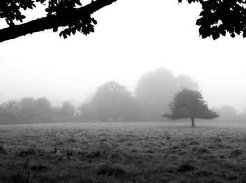 Morning Fog Emerging From The Trees - image gratuit #287039