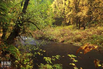 Silver Creek - Free image #287179