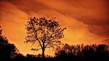Big Tree with Red Sky in the Winter Night - Kostenloses image #287309