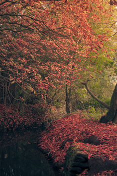 Autumn - Free image #287379