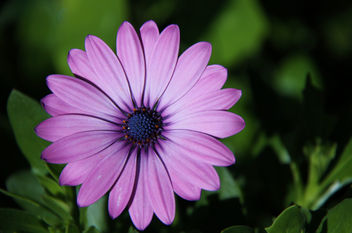Flower - image gratuit(e) #287409