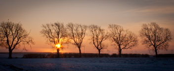 Winter Dawn - image gratuit #287639