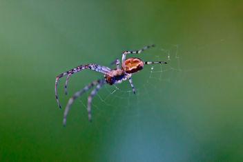 spider - Kostenloses image #288369