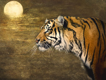 Textured Tiger - Kostenloses image #288889