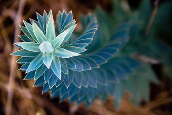 Flower - image gratuit #288929