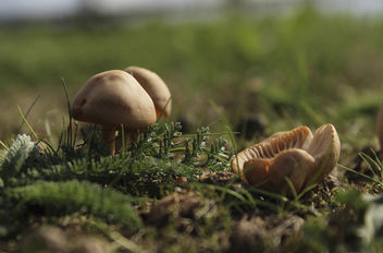 Mushrooms - Free image #289049
